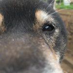 #今日の柴犬 (Instagram)